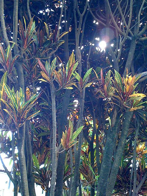 bushes-scene