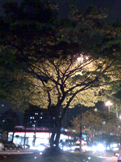 tree-at-night